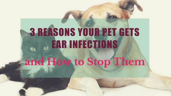 3 Reasons Your Pet Gets Ear Infections and How to Stop Them