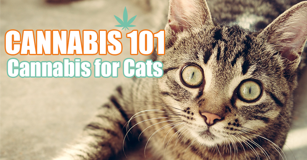 cannabis 101 for cats