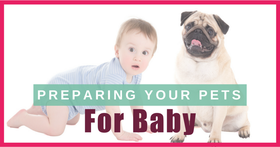 Preparing Pets for Baby