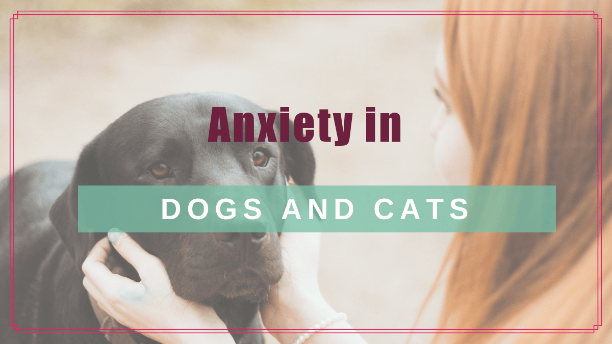 Anxiety in Dogs and Cats