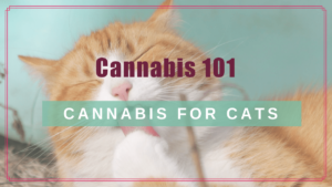 cannabis 101 cbd cats boulderholisticvet blog post