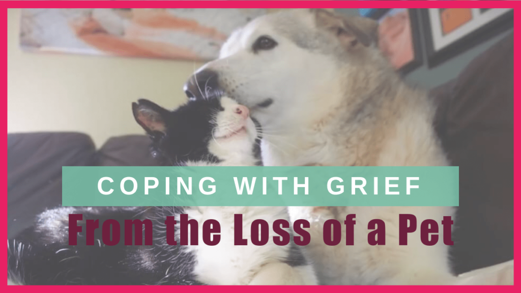 coping grief loss pet boulderholisticvet blog post