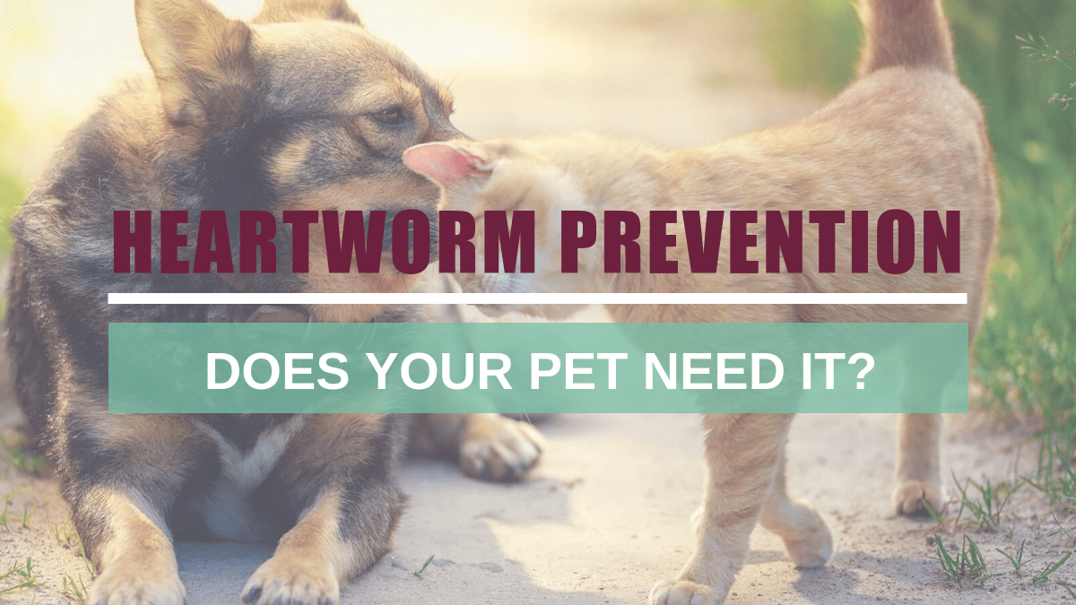 Heartworm Prevention: Does your pet need it?