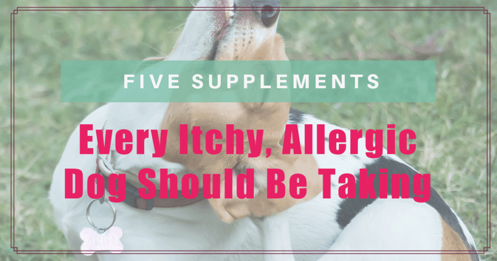 5 Supplements EVERY Itchy, Allergic Dog Should Be Taking