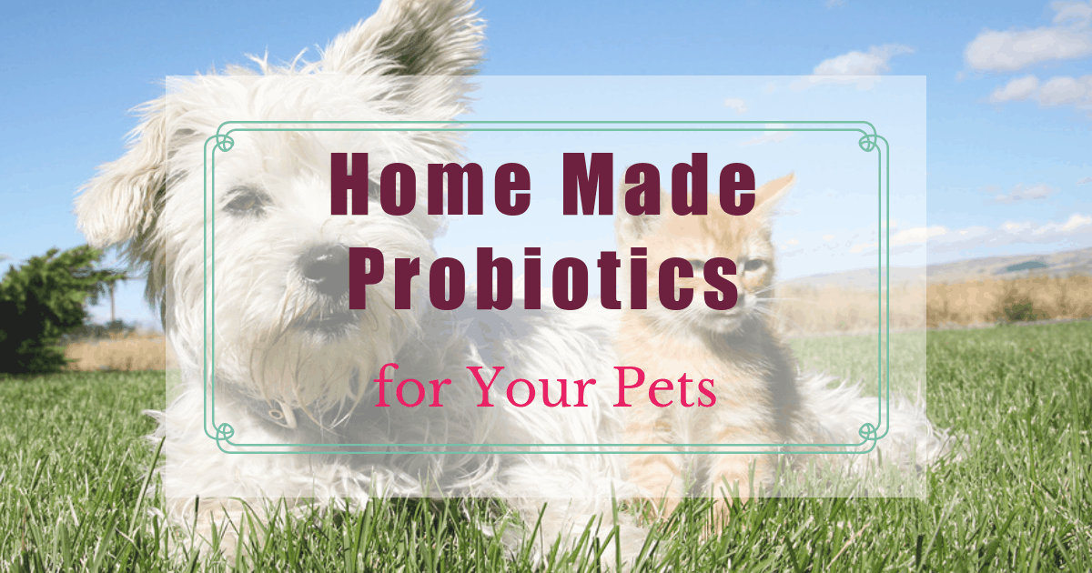 Home Made Probiotics for Your Pets