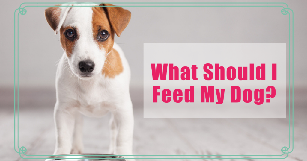 what should i feed my dog boulder holistic vet angie krause
