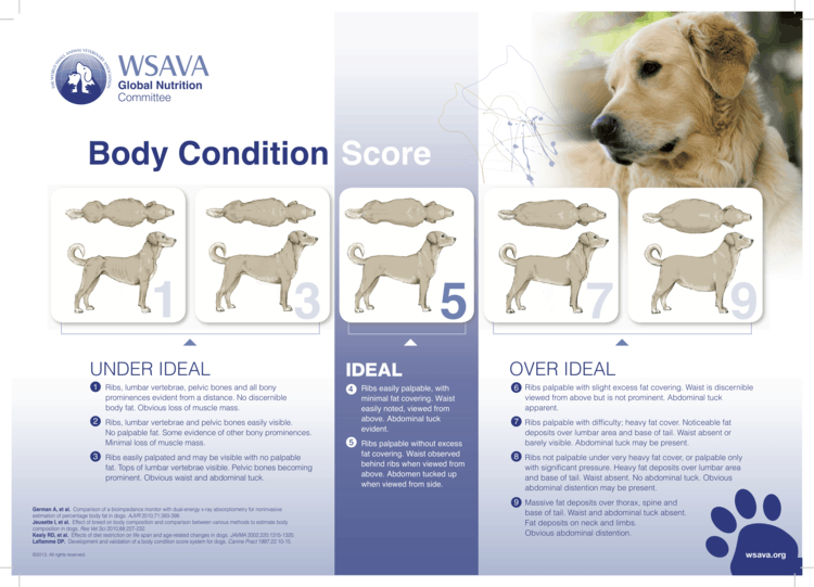 body condition dogs boulderholisticvet dr. angie krause