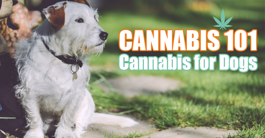 cannabis for dogs